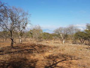 Zandspruit dry area